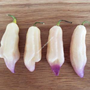 Smooth White Chilli