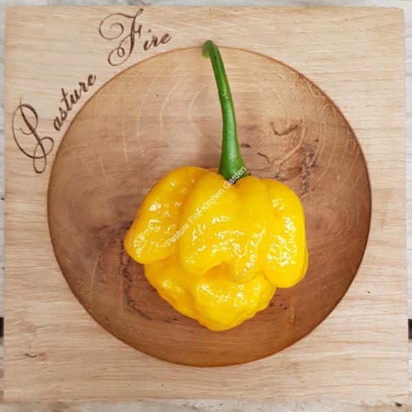 7 Pot Yellow Chilli