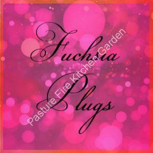 Fuchsia Plug Plants