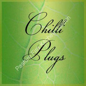 Chilli Plug Plants